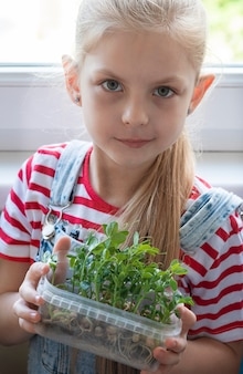 Een klein meisje bij het raam kijkt toe hoe microgroene erwten groeien
