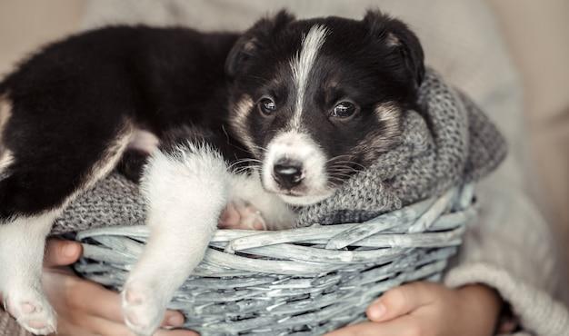 Een klein meisje met een puppy in een mand.