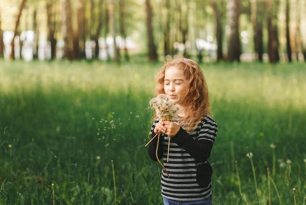 Een klein meisje met krullend haar blaast op witte paardebloemen in de zomer in het park. portret van een grote