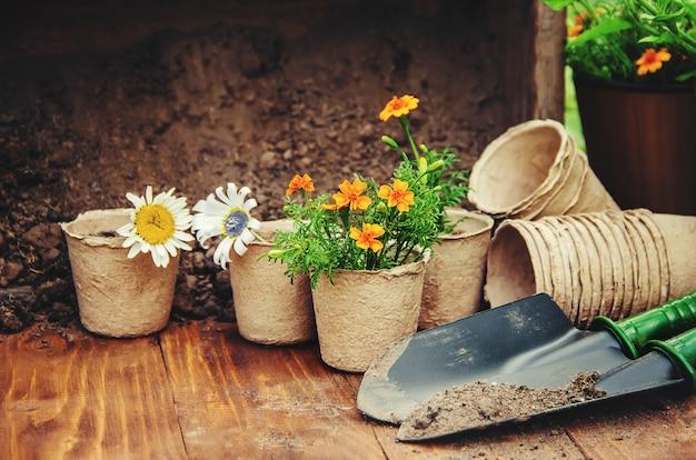 Een klein meisje plant bloemen. de jonge tuinman. selectieve aandacht.