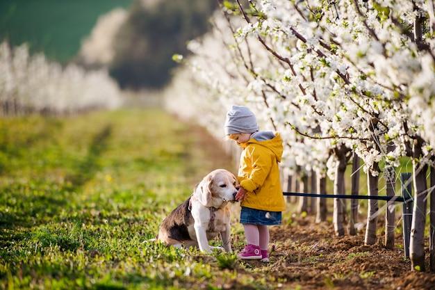 Een klein peutermeisje met een hond in de boomgaard in het voorjaar, aan het spelen.