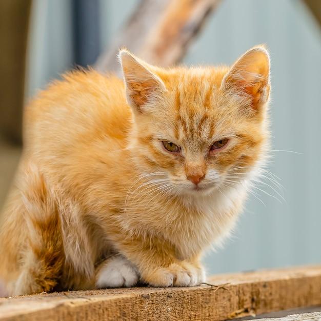 Een klein rood katje zit met slaperige ogen op het bord.