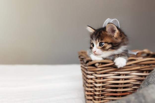 Een klein schattig driekleurig katje zit in een houten rieten mand en kijkt naar voren. foto van een ontspannen gelukkige kat die in een mand zit. concept van gezond en gelukkig gezelschapsdier