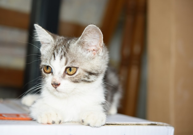 Een klein schattig katje zit op een kartonnen doos