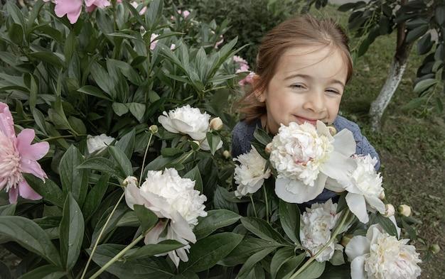 Een klein schattig meisje ruikt een struik met witte pioenrozen die in de tuin bloeien.