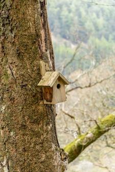 Een klein vogelhuisje op een boom in de bossen van glendalough co wicklow ireland