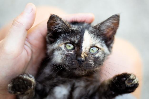 Een klein zwart gevlekt katje in de handen van de man ligt met zijn poten uit elkaar. pluizig, speels huisdier.