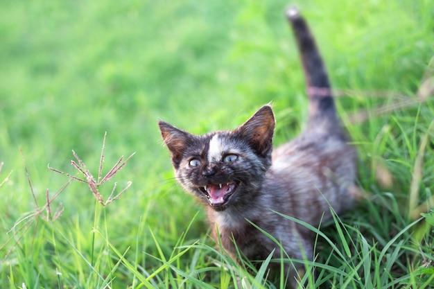 Een klein zwart grappig katje met een streep op zijn gezicht miauwt in de zomer terwijl hij zijn mond opent