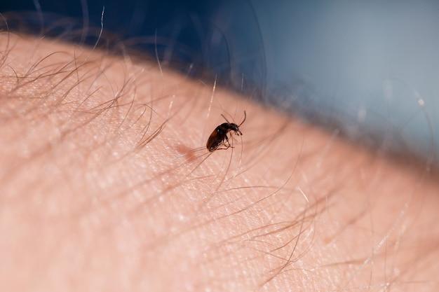 Een klein zwart insect zit op een handclose-up. insect in de palm van je hand. detailopname