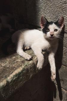 Een klein zwart-wit katje op straat dat op straat ligt in het centrum van fez