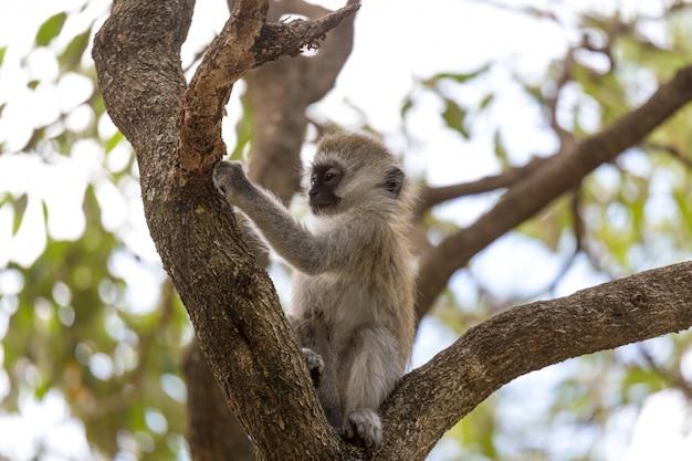 Een kleine aap speelt op de tak van een boom