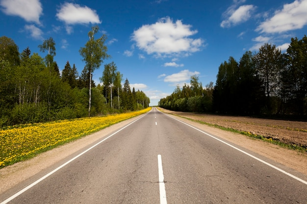 Een kleine asfaltweg die door het bos loopt. voorjaar