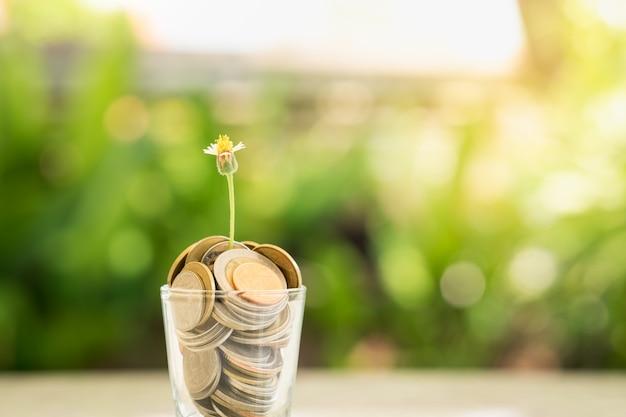 Een kleine bloem groeit in een glas gevuld met munten