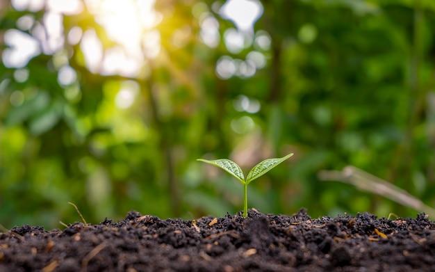 Een kleine boom met groene bladeren met natuurlijke groei en zonlicht. concept van plantengroei en ecologische duurzaamheid.