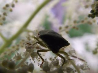 Een kleine crawler tussen bloemen