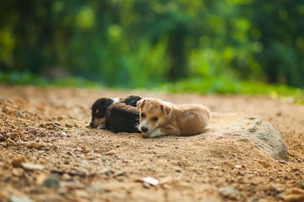 Een kleine dakloze pup