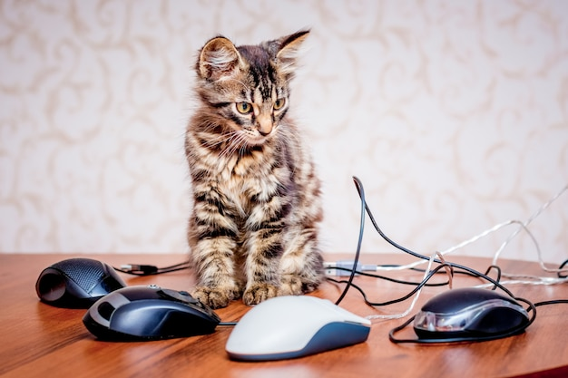 Een kleine gestreepte kitten in de buurt van een computer muizen. werk op kantoor op de computer
