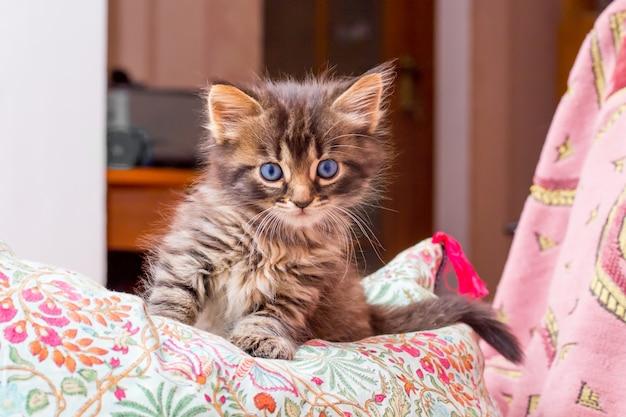 Een kleine gestreepte kitten met blauwe ogen zitten in de slaapkamer op het kussen
