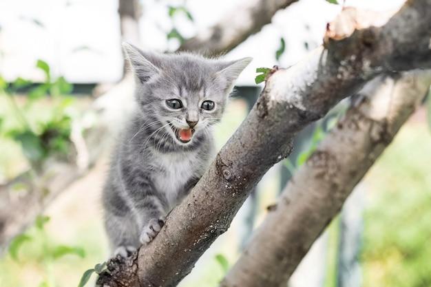Een kleine grijze kat klimt langs de boom en schreeuwt uit angst voor hoogte
