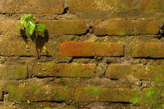 Een kleine groene plant en groen mos op de stenen muren in het zonlicht