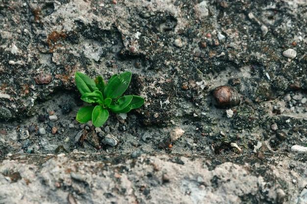 Een kleine groene spruit baant zich een weg door beton. de strijd, de confrontatie. detailopname. copyspace.