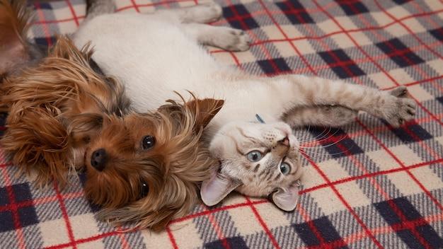 Een kleine hond en een kitten liggen thuis en kijken naar de lens