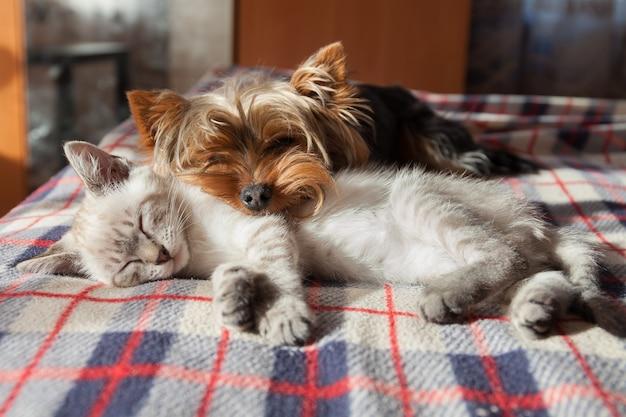 Een kleine hond en een kitten slapen thuis