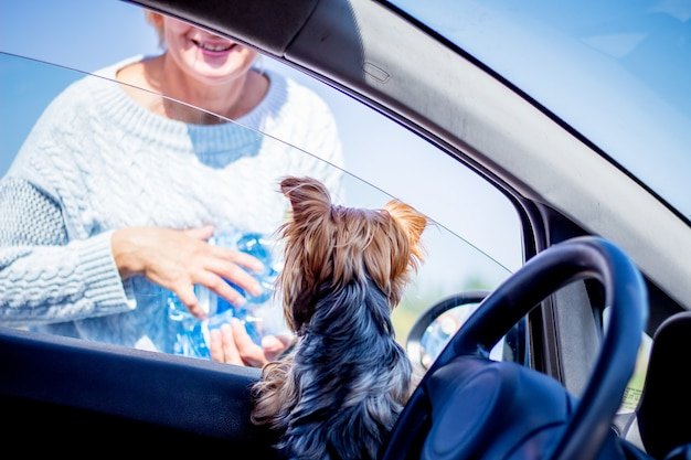 Een kleine hond in een auto ontmoet graag zijn minnares, die is teruggekeerd met aankopen