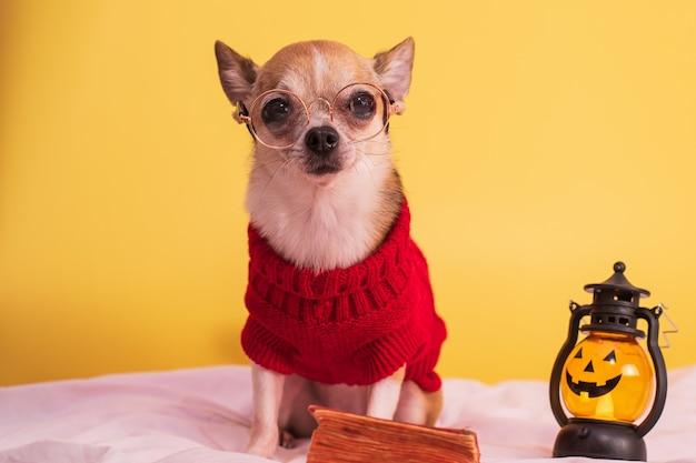 Een kleine hond in een bril en in een feestelijke halloween-outfit zit op een gele achtergrond met een lantaarn
