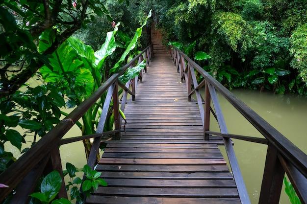 Een kleine houten brug over een kleine rivier in een regenwoud in madagaskar