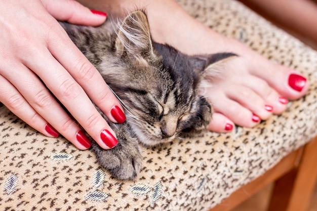 Een kleine kat slaapt aan de voeten van het meisje. een meisje met een modieuze manicure maakt zich zorgen over dieren