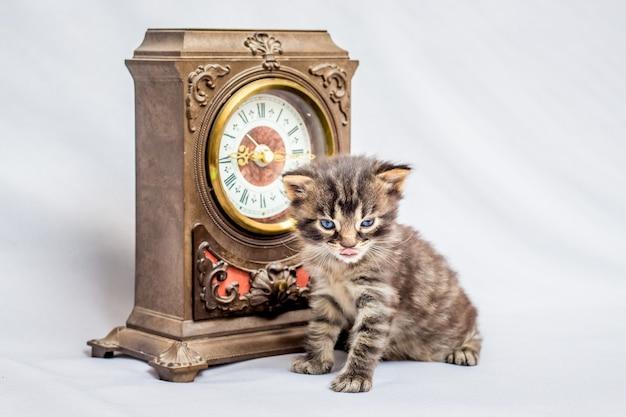 Een kleine kitten in de buurt van een oud horloge. het is tijd om te ontbijten