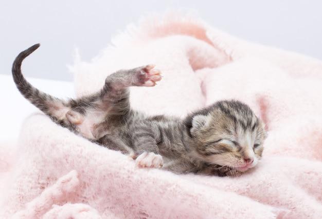 Een kleine kitten paw upp jongen of meisje kitten