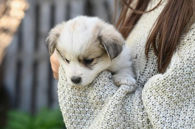 Een kleine lichte pup in de armen van een meisje.