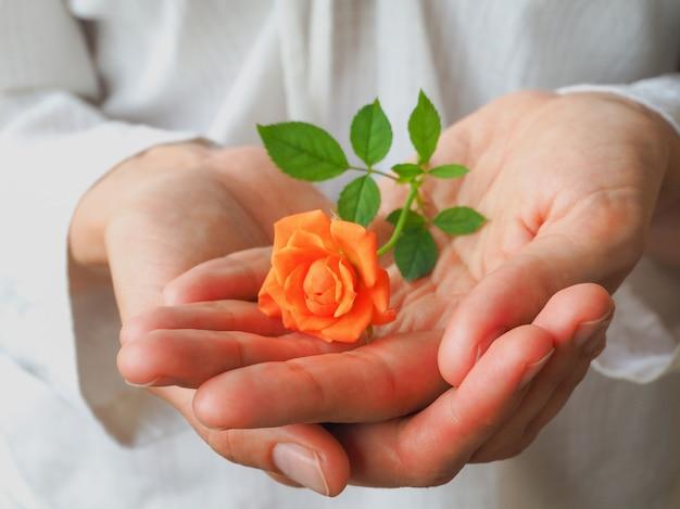 Een kleine oranje roos op de handpalm van een vrouw