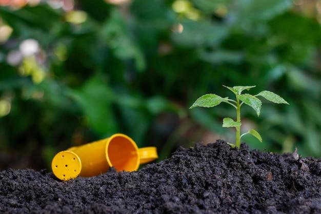 Een kleine plant planten op een stapel grond