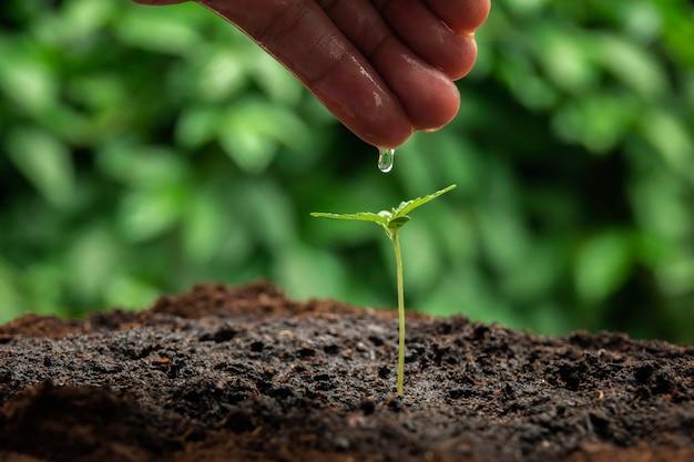 Een kleine plant van cannabis zaailingen in het stadium van vegetatie geplant in de grond in de zon, een prachtige achtergrond, ecepties van teelt in een indoor marihuana voor medische doeleinden