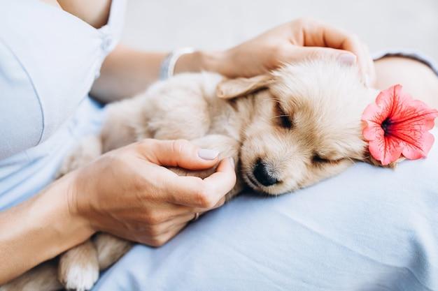 Een kleine pup ligt in de armen van de eigenaar close-up