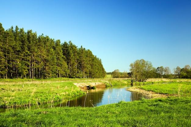 Een kleine rivier in de zomer. wit-rusland