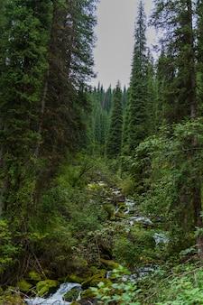 Een kleine rivier in het bos in de zomer