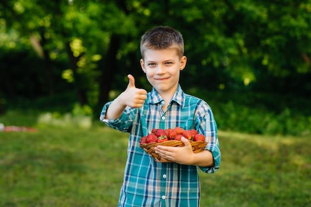 Een kleine schattige jongen staat met een grote doos rijpe en heerlijke aardbeien. oogst. rijpe aardbeien. natuurlijke en heerlijke bes.
