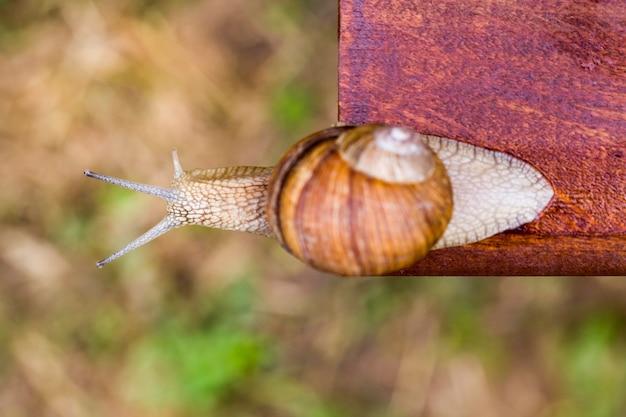 Een kleine slak kruipt op een hoogte op een houten ondergrond