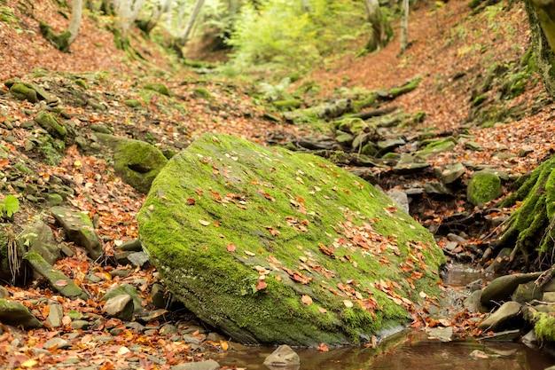 Een kleine stroom in de herfst beukenbos.