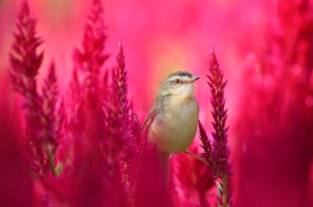 Een kleine vogel zat vast met rode bloemen