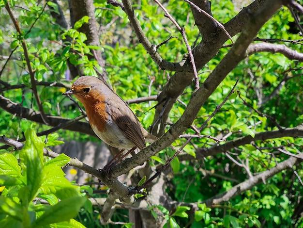 Een kleine vogel zit op een boom met een insect in zijn bek.