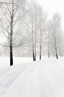 Een kleine weg in het winterseizoen. winter. spoor.