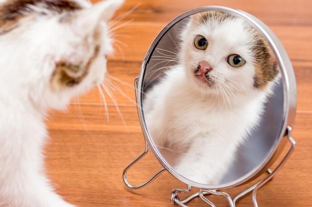 Een kleine witte kitten kijkt in de spiegel. reflecteer het kitten in de spiegel