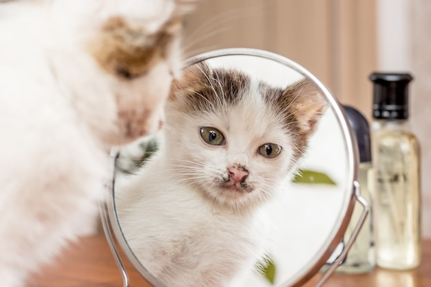 Een kleine witte kitten kijkt in de spiegel. reflectie kat in de spiegel