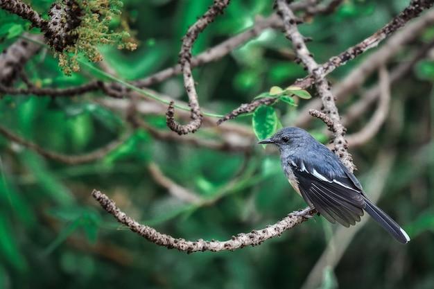 Een kleine zwarte vogel klampt zich vast aan een boomtak en foerageert in de ochtend in een centraal park in een grote stad.
