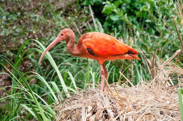 Een kleurrijke vogel